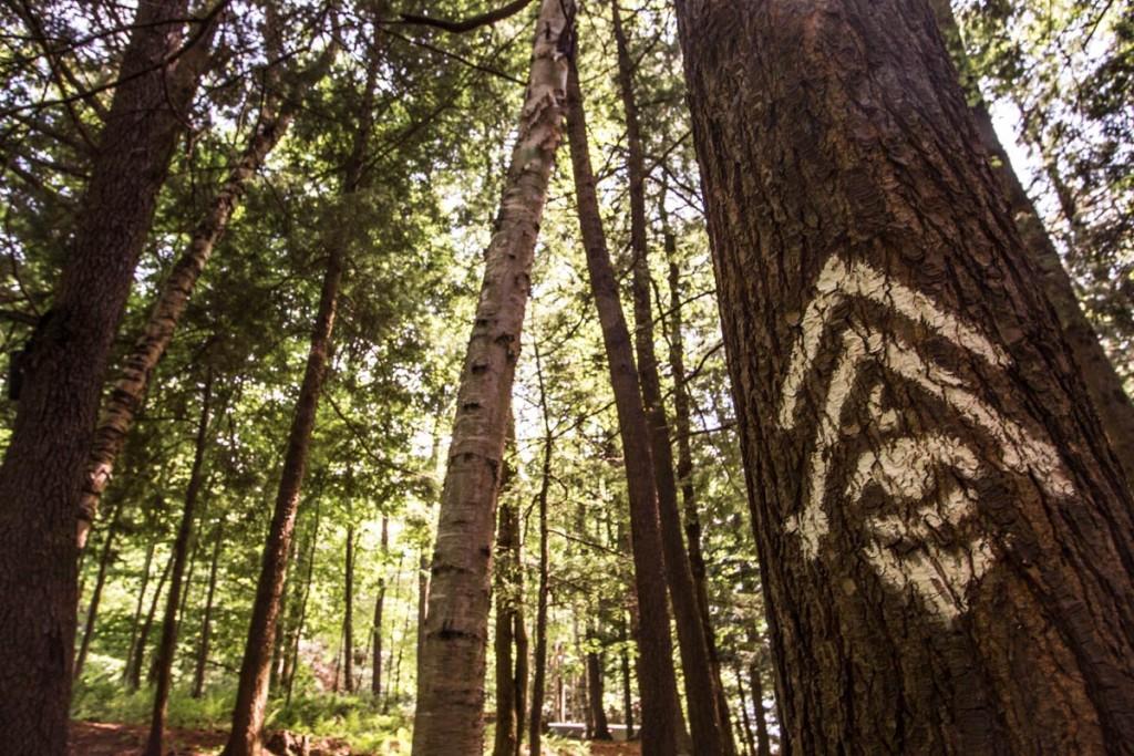 foresta-lumina-2